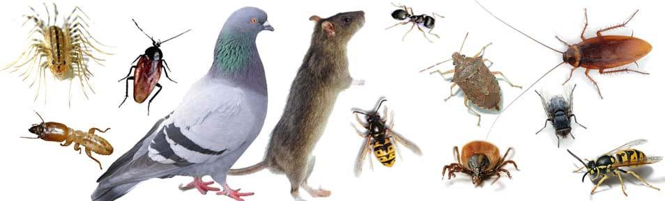 Presupuestos de control de plagas en Alcobendas